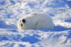 Tiny seal - CountryLiving.com