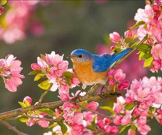Must be Spring! Pretty Birds, Beautiful Birds, Animals Beautiful, Cute Animals, Pretty Flowers, All Birds, Little Birds, Love Birds, Funny Bird