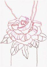 Drawing - Ink - Art  Sommer Rosen - Tusche auf Hahnemühle Burgund - 22 x 17 cm (c) Zeichnung von Susanne Haun