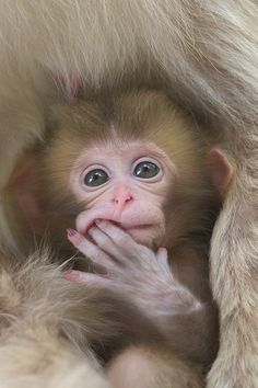 I think I'm getting some teefs! Baby monkey | via Tumblr on We Heart It.