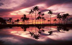 units of Palm Trees Wallpaper 1600×1200 Palm Trees Beach Wallpapers (32 Wallpapers)   Adorable Wallpapers