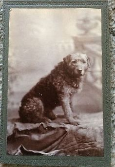 Small Cabinet Photo / CDV of cute Dog c 1890. Unmarked. This came with a bunch of old CDVs/Cabinet Cards from same era. Mounted photo is 2.5 x 4 .