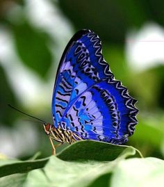 Funny Wildlife, funnywildlife: Pretty in Blue!! via Maureen K