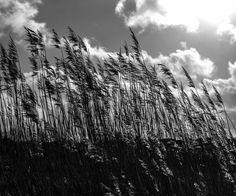 Wuiven in de wind