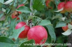 Apple Picking, Fall Activities for Kids