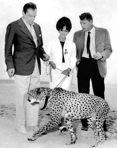CC, Burt Lancaster and Luchino Visconti with a leopard on a beach of Cannes to advertise for, well, The Leopard.