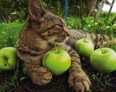 津軽のネコはリンゴまみれ?―岩合光昭写真展「津軽のねこ」、4月4日から開催 - えんウチ