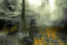 Colorful forest- Thierry Vanhuysse Nature and wildlife, photographic art on plexiglass, Cobra Art Company