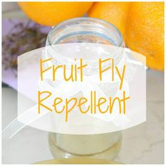 how to keep flies out of kitchen