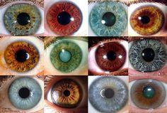 iridology explained