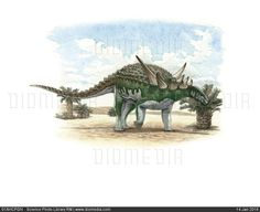 Sauropelta edwardsorum dinosaur, artwork - stock photo