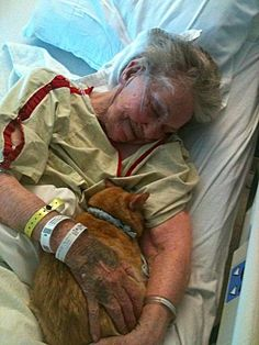 """""""We all know how strict hospitals can be about anything out of the ordinary, but one hospital made an exception — and it made a world of difference to a dying woman.  This picture was posted by a guy on Reddit. His grandmother is in a hospital dying, and the hospital allowed the family to bring her cat in for a visit."""""""