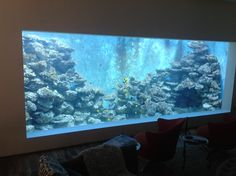 Reef Aquarium with no corals 9000 G