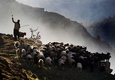 Kurdish Hills and Komodo Dragons All in a Day's Work for Kiwi Photographer | Asia Society