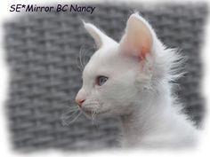 nancy4.jpg (2550×1919)