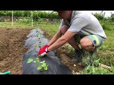 Garden Plants, Outdoor, Gardening, Outdoors, Lawn And Garden, Outdoor Games, The Great Outdoors, Horticulture
