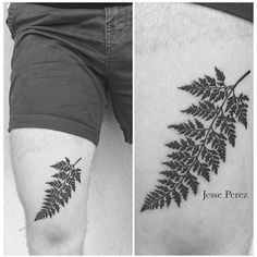 fern tattoo                                                                                                                                                                                 More