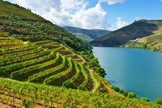 Weinfeste Und Wine Events In Aller Welt Und Wie Sie Sich
