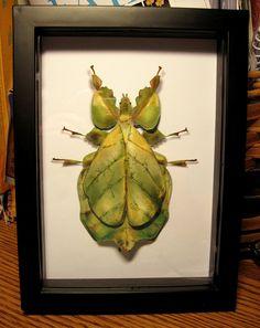3D Paper insect art - Jacque Davis