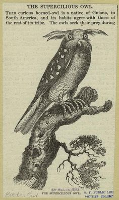 If you don't have a disapproving rabbit at hand, try a supercilious owl.