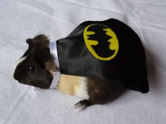 Batman capes for guinea pigs? I guess it's true that EVERYBODY likes to feel SUPER, at least once in awhile!