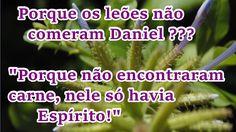 FALANDO DE VIDA!!: Porque os leões não comeram Daniel??