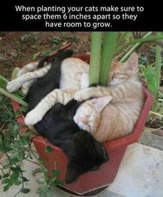 Lol, funny pics, humour quotes, funny jokes, jokes funny, hilarious funny, Lmao funny, hilarious cats  …For the best funny quotes and pics visit www.bestfunnyjokes4u.com