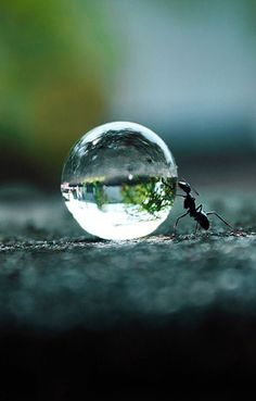 .nature   water drop   ant.