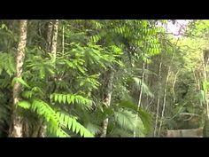 Gottyline Daxline PAX http://petclube.com.br/petclube-amichetti/super-amstaff-amichetti.html