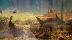 Акулы аквариумного мира - пангасиусы Канал об аквариумистике Ильи Алтухова - поддержим канал подписками https://www.youtube.com/channel/UC0ifzIyVH_ANkYuJAnem-Eg