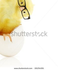 Shutterstock - vector Cute little chicken in black eye glasses coming out of a white egg isolated on white background - stock photo