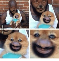 Geek Discover Funny pictures about Horrifying Face Swap. Oh and cool pics about Horrifying Face Swap. Also Horrifying Face Swap photos. Stupid Funny Funny Cute The Funny Hilarious Animal Face Swap Animal Faces Funny Relatable Memes Funny Posts Funny Humor Really Funny Memes, Stupid Funny Memes, Funny Laugh, Funny Relatable Memes, Funny Posts, Funny Stuff, Fun Funny, Super Funny, Funny Animal Pictures