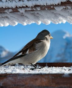 Italian Bird :), ❄ Cortina, Italy