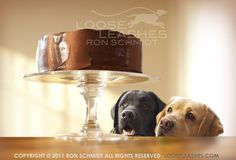 Ron Schmidt is an amazing dog photographer and his site (Loose Leashes) is full of beautiful, humorous prints.