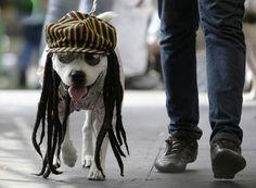 perros reggae