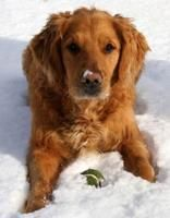 Winter Safety Tips for Dogs Dog Nutrition, Safety Tips, Pup, Winter, Dogs, Dog Kennels, Animals, Winter Time, Animales