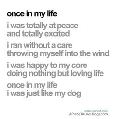Dog Quote