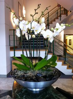 White Phalaenopsis orchids planted in brushed stainless steel bowl with polished black pebbles