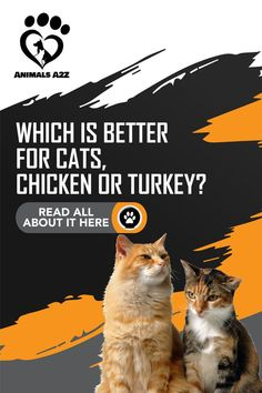 [ Detailed Answer from Cat Lover ] Other questions answered: Is Chicken and Turkey heart good for cats? How to prepare organ meat for cats? Whats the best type of meat to feed cats? Best Cat Food, Healthy Pets, Healthy Food, Cat Info, Cat Health, Health Tips, Dog List, Cat Feeding, Cat Facts