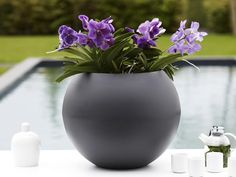 Pure Ball Planter by Elho, a lovely rounded fluid design, suitable for solitary placement on a pillar or as a table center in your home. Also looks great on a patio, it's easy to plant thanks to the elevated bottom.