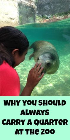 Why You Should Always Carry a Quarter at the Zoo - Traveling Mom