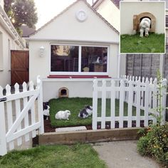 These rabbits have their own doorway made in an unused garage which leads out onto their own fenced off garden with a wire roof
