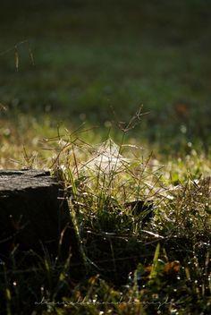 la Tana del Coniglio: autumn morning / ragnatele in un mattino d'autunno - ottobre 2016
