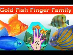 Gold Fish Finger Family Nursery Children 3d  Rhyme | Fish finger Family ...