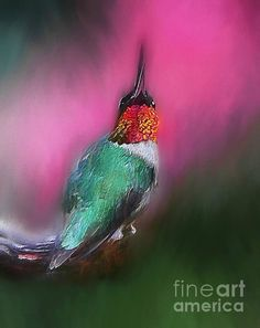 Colorful digital painting of a hummingbird.