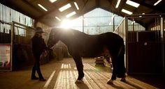 Top 10 Health Benefits of Owning a Horse HealthFitnessRevolution