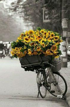 #zonnebloemen op een fiets www.flamingobloemen.nl