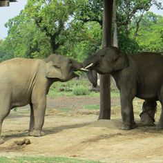 A Victory for Elephants in Nepal!