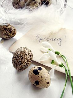 Spring Equinox:  #Eggs for the #Spring #Equinox.