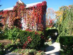 The Tangled Garden, Nova Scotia.I'm ready to go back.